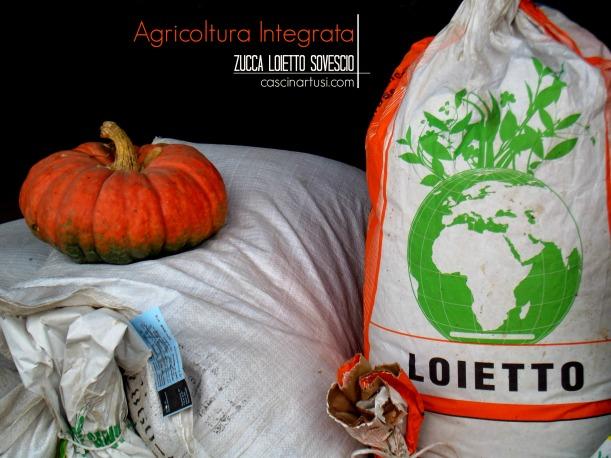 Agricoltura Integrata: zucca loietto sovescio